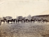 Horses at Lord George Sanger's Circus